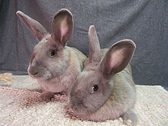 American Mix for adoption in Newport, Delaware - Cassidy & Cheyenne