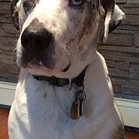 Adopt A Pet :: Skye - Warwick, NY