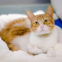 Adopt A Pet :: Twinkle - Arlington, VA