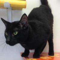 Adopt A Pet :: Reuben - Potsdam, NY