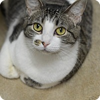 Adopt A Pet :: Inga	14139 - Atlanta, GA