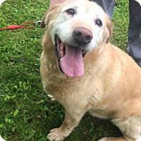 Adopt A Pet :: Bubba - Yorktown, VA