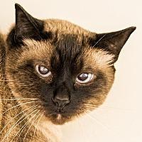 Adopt A Pet :: Maisy - Fairport, NY