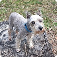 Adopt A Pet :: Angel - Mocksville, NC