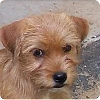 Adopt A Pet :: DOBIE - Parsons, TN