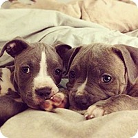Adopt A Pet :: Wren and Ducky - Santa Barbara, CA