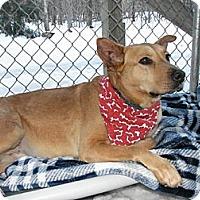 Adopt A Pet :: Lady - Douglas, MA