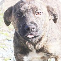 Adopt A Pet :: Gracie - Chapel Hill, NC