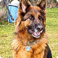 Adopt A Pet :: Belle*ADOPTION PENDING* - Mill Creek, WA