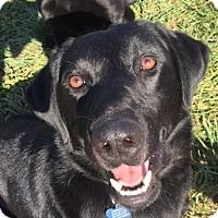 Adopt A Pet :: Gordy - Vacaville, CA