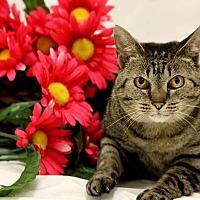 Adopt A Pet :: CIARA - Owenboro, KY