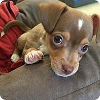 Adopt A Pet :: Bunny - Glastonbury, CT