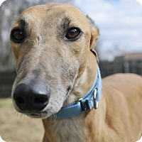 Adopt A Pet :: Pally - Lexington, SC