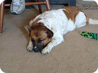 Corgi Mix Dog for adoption in Zanesville, Ohio - Suki