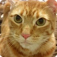Adopt A Pet :: Dawson - Jerseyville, IL
