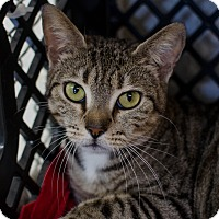 Adopt A Pet :: Esmeralda - Greenwood, SC