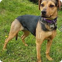 Adopt A Pet :: LadyBug-Adopted! - Detroit, MI