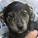 Adopt A Pet :: Dubhe