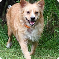 Adopt A Pet :: Trixie - Union, CT