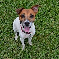 Adopt A Pet :: A - JACKIE - Augusta, ME