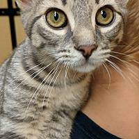 Adopt A Pet :: DRAX - Clayton, NJ
