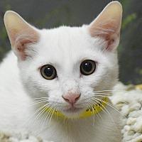 Adopt A Pet :: Jessie - Huntley, IL