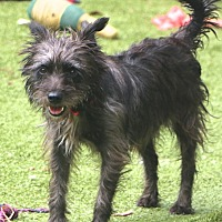 Adopt A Pet :: Mitzi - Norwalk, CT