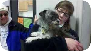 Shih Tzu/Jack Russell Terrier Mix Dog for adoption in Mount Gretna, Pennsylvania - Debbie Fischer