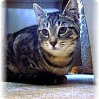 Adopt A Pet :: Amy - Shelton, WA