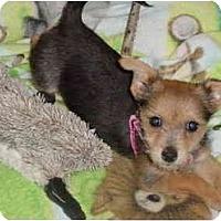 Adopt A Pet :: Suki - West Palm Beach, FL