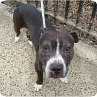 Adopt A Pet :: Finnegan - Warren, NJ