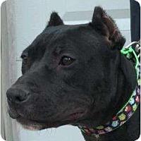Adopt A Pet :: Gabrielle - Killen, AL