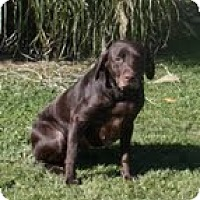 Adopt A Pet :: Lucy - Lewisville, IN
