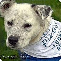 Adopt A Pet :: Luna - PENDING, in Maine - kennebunkport, ME