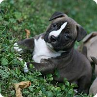 Adopt A Pet :: Ruby - Oak Creek, WI