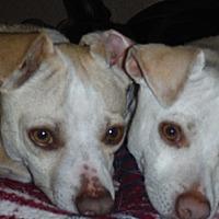 Adopt A Pet :: Cornbread Succotash & Peabody - Arenas Valley, NM