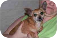 Chihuahua Dog for adoption in Trion, Georgia - Pee Wee