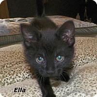 Adopt A Pet :: Ella - Dover, OH