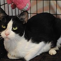 Adopt A Pet :: Piper - Lafayette, NJ