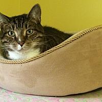Adopt A Pet :: Herbie - Medway, MA