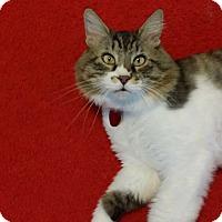 Adopt A Pet :: Martin Von Nostrand - Edmond, OK