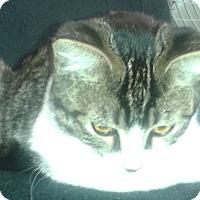 Adopt A Pet :: Ellie - Whittier, CA