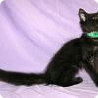 Adopt A Pet :: Venus - Powell, OH