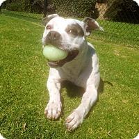 Adopt A Pet :: Sedona - Dana Point, CA