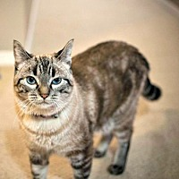 Adopt A Pet :: Felicity Hunt - Edmonton, AB