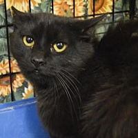 Adopt A Pet :: Onyx - Logan, UT