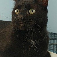 Adopt A Pet :: Shiloh - Attica, NY