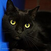 Adopt A Pet :: Pyramus - Tucson, AZ