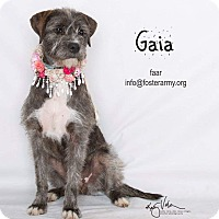 Adopt A Pet :: Gaia - Riverside, CA