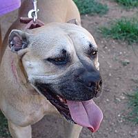 Adopt A Pet :: Molly - Joshua, TX